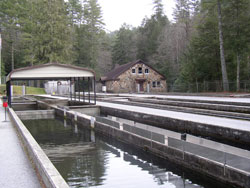 south carolina department of natural resources fish hatcheries